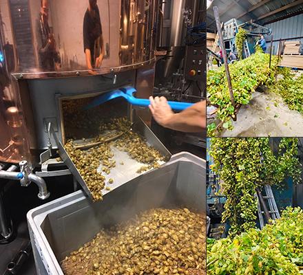 Bière de récolte au houblon frais